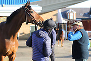 Top Novice Chaser MONBEG LEGEND being inspected by his trainer Nicky Henderson prior to  the Scottish Grand National race day at Ayr Racecourse, Ayr, Scotland on 13 April 2019.