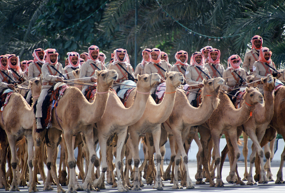 Cavalry soldiers riding camels, Abu Dhabi for celebration of 20th Anniversary of United Arab Emirates