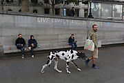 An environmental activist leads his pet Great Dane dog after drinking from a public fountain, while protesting about Climate Change during an occupation of Trafalgar Square in central London, the third day of a two-week prolonged worldwide protest by members of Extinction Rebellion, on 9th October 2019, in London, England.