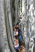 Kids, banyan tree, Foster Botanical Gardens, Honolulu, Oahu, Hawaii<br />