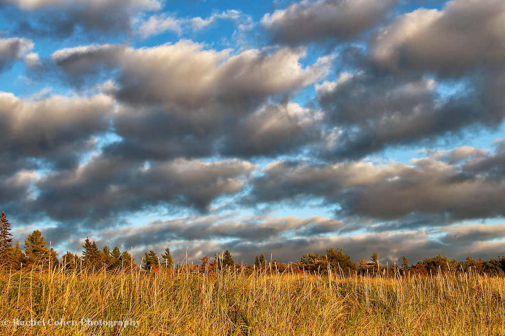 &quot;Autumn's Light&quot;<br /> <br /> With the late day sun, and a storm passing quickly. Beautiful clouds blow past the golden grasses, and trees on Lake Michigan in the Upper Peninsula!<br /> <br /> Autumn Landscapes by Rachel Cohen