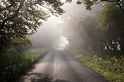 Misty autumn morning with trees lining quiet country road at Compton Bassett, near Calne, Wiltshire, England, UK