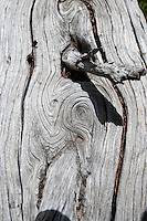 Weathered wood on Native Lake Trail, Leadville, CO.