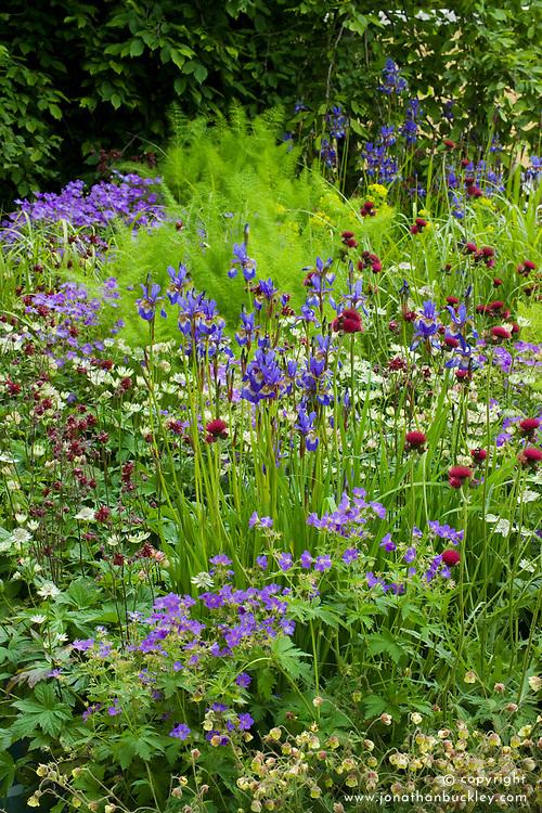 Cirsium rivulare, Iris sibirica and geraniums in the Laurent-Perrier Garden. Design: Tom Stuart-Smith - Chelsea 2005