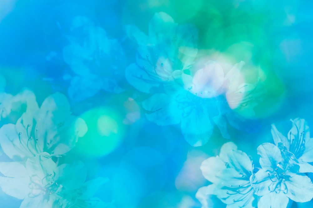 Colorful blue green and aqua abstract background with floral pattern of azalea blossoms