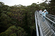 The Tree Top Wlak is an elevated  path on  Valley of the Giants park near Denmark where vistors can walk at canopy level of  huge karri and other native australian trees.