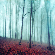 Bare forest on a misty winter day - manipulated photograph
