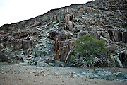 21 December 2011, Richtersveld, South Africa. Indigineous plants of the national park.