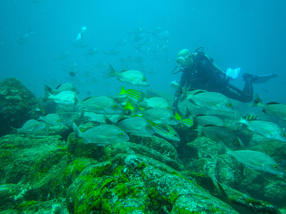 Diving at the Galapgos, Mosquera, Galapagos, Ecuador.