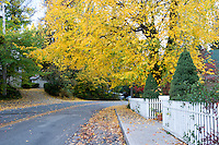 Fall Foliage Along Residential Street, Nevada City, California