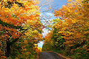 Autumn leaves along the road to Fairbank Provincial Park in Northern Ontario, Canada.