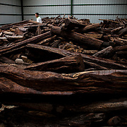 Cambodia, 2012. Confiscated rosewood timber.