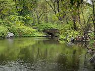 Oak bridge seen from The Ramble in Central Park.