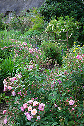 The Old Garden at Hidcote Manor with Rosa 'Cornelia' in the foreground and R. 'Goldfinch' on the arch