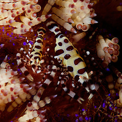 Dive Spot: Nudi Retreat