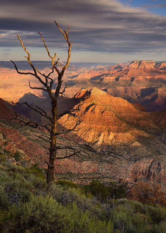 Grand Canyon viewed from Desert View.