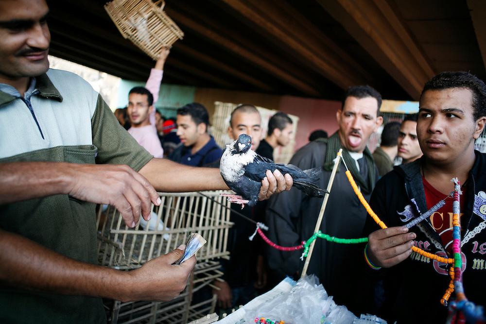 A man sells pigeons at the Suq al-Guma, the Friday market in Cairo.