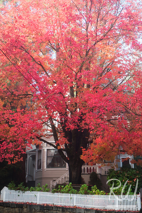 Fall Color and Victorian Home, Nevada City, California