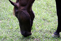 July 2007: Horse, Chattanooga Nature Center. Attractions near Chattanooga Tennessee. Point Park, National Park Service - Lookout Mountain, TN. (Photo by Alan Look)