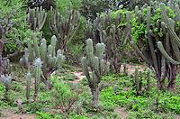 Cactus in Isosog