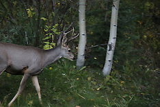 20130925_coloradoFall