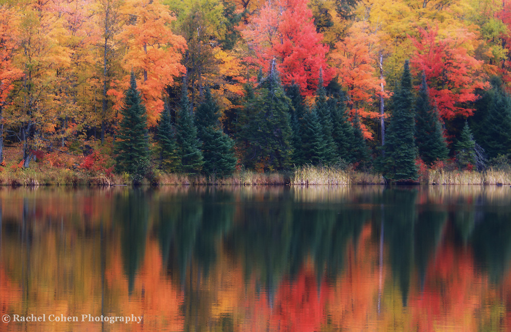 &quot;Reflections on Lake Plumbago&quot;<br />