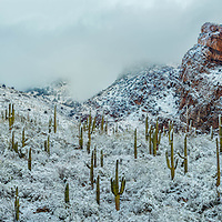 Rare sighting in the Arizona Desert. Snow covered mountains and saguaros.
