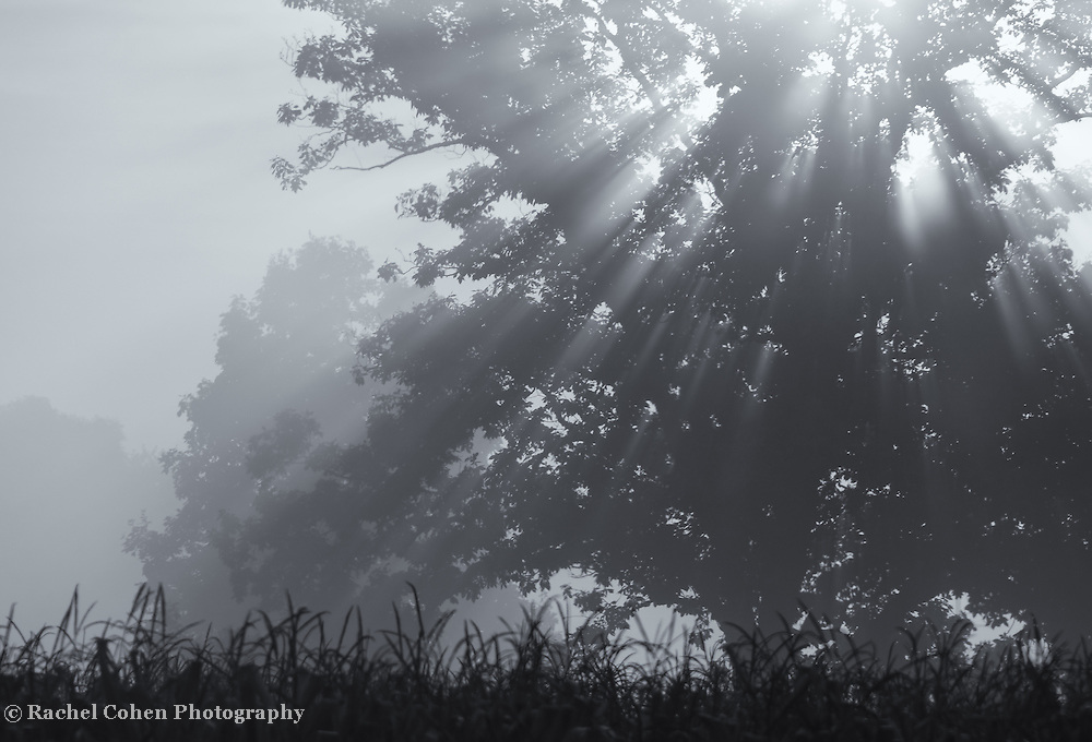 &quot;Silent Blessings&quot;<br />