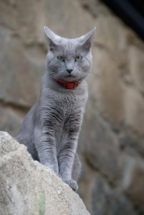 Cat in Valparaiso, Chile.