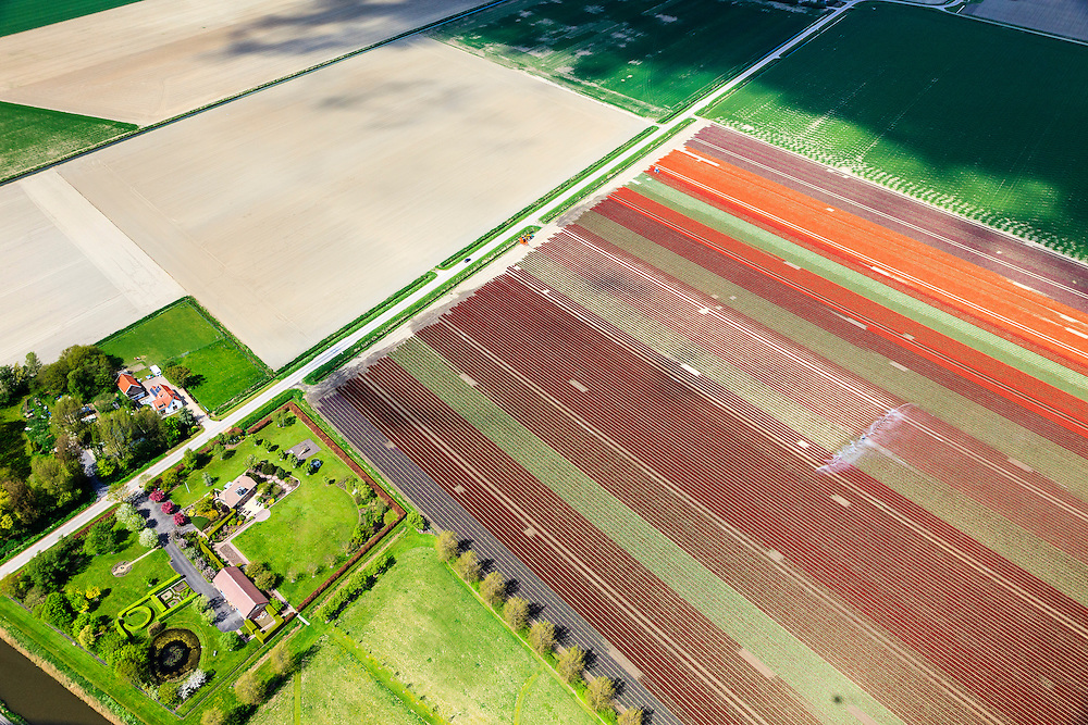 Nederland, Zuid-Holland, Goeree-Overflakkee, 09-05-2013; sproeien bloembollenvelden ten zuiden van Middelharnis.<br /> Spraying of bulb fields, South Holland Islands. <br /> luchtfoto (toeslag op standard tarieven)<br /> aerial photo (additional fee required)<br /> copyright foto/photo Siebe Swart