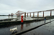 The railway bridge over the Firth of Fourth. Man walking his dog.