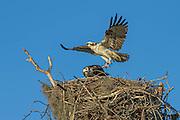 Nest Building