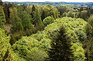 Europa, Deutschland, Nordrhein-Westfalen, Bergisches Land, Waldbroel, Blick vom 40 Meter hohen Aussichtsturm des Baumwipfelpfads im Naturerlebnispark Panarbora, Baumkronen. - <br /> <br /> Europe, Germany, North Rhine-Westphalia, Bergisches Land region, Waldbroel, view from the 40 meter high look-out at the nature park Panarbora, treetop.