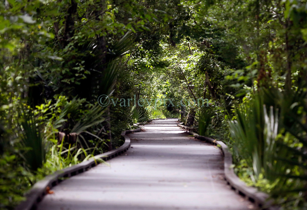 01 June 2015. Jean Lafitte National Historic Park, Louisiana.<br /> Raised walkway over the swamp at the Barataria Preserve wetlands south or New Orleans. <br /> Photo&copy;; Charlie Varley/varleypix.com