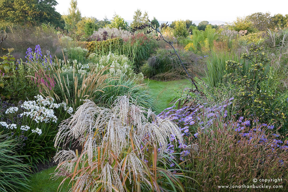 Autumn borders at Marchants packed with grasses and late flowering perennials. Planting includes Pennisetum macrourum, miscanthus, asters and agapanthus