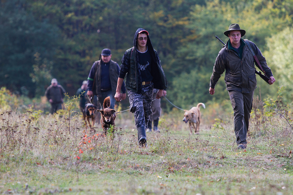 Group of Romanian hunters and their dogs returning from a driving hunt for Wild boar (Sus scrofa) in the forest area outside the village of Mehadia, Caras Severin, Romania.