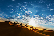 Caravan in the desert during sunrise against a beautiful cloudy sky, Erg Chebbi, Merzouga, Morocco.