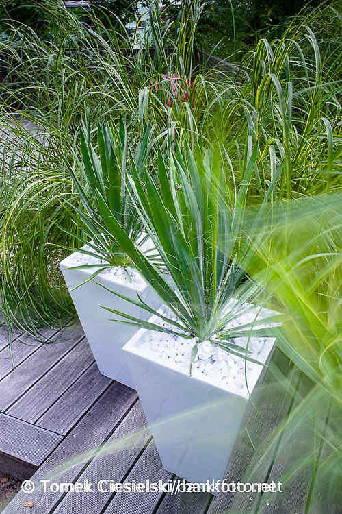 Geometrical containers planted by yucca filamentosa
