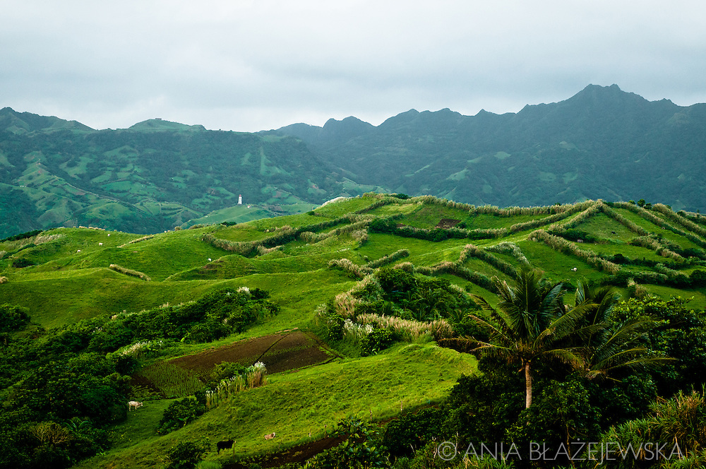 Philippines, Batanes. Mahatao Hedgerows,  a popular pasture for cows from Batanes and one of the most popular touristic areas.