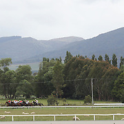 The horses race with a scenic country backdrop during a day at the Races at the Gore Race Meeting, Gore, Southland, New Zealand. 18th December 2011. Photo Tim Clayton