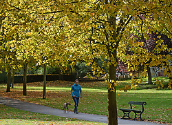 © Licensed to London News Pictures. 20/10/2016. York, UK.  A dog walker looks at the autumn colours on display in Rowntree Park, York.  Photo credit: Anna Gowthorpe/LNP