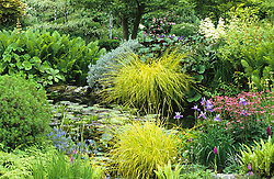 The upper pond at Glen Chantry. Planting include Carex elata 'Aurea', Iris sibirica 'Placid Waters', Ligularia 'Desdemona' & Rodgersia aesculifolia