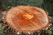 A tree stump tells many a story. Such as the circle of life.