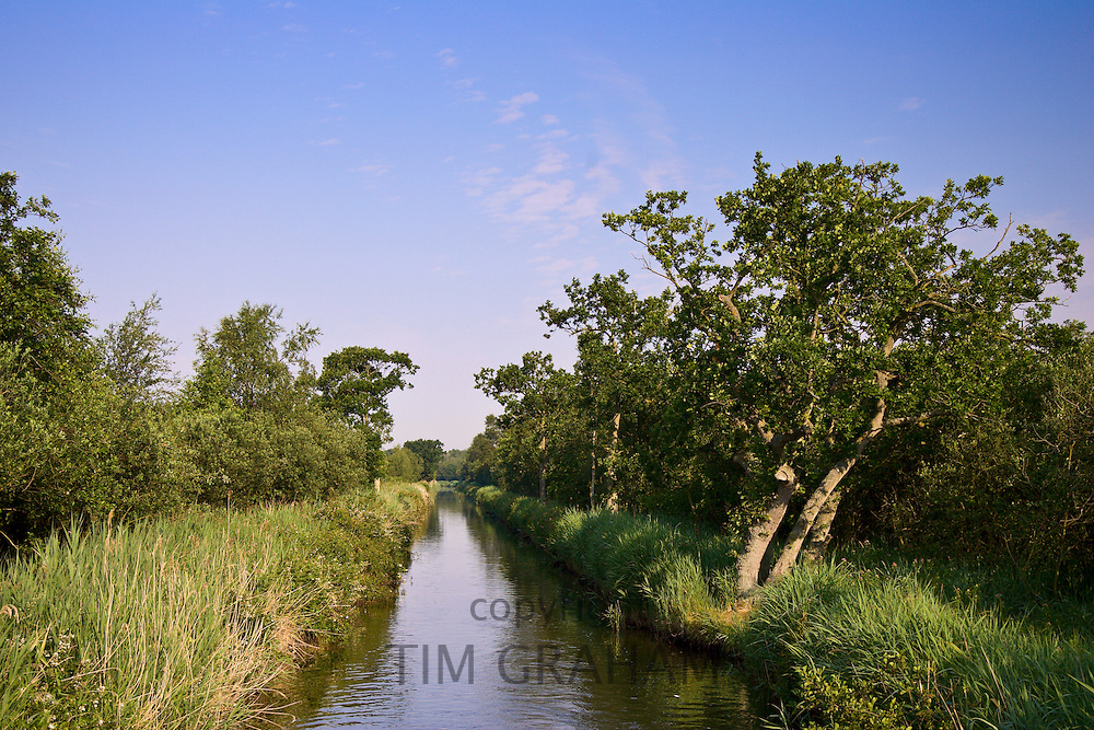 Narrow waterway, Norfolk Broads, United Kingdom