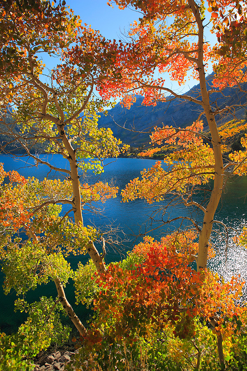 Lake Sabrina Late Afternoon - Fall Color