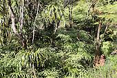 French Polynesia Tahiti Mahina ferns vegetation