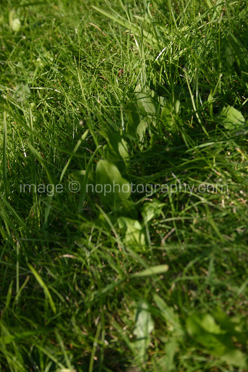 Grass close-up<br />