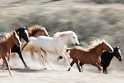 MAKA MEANS EARTH IN THE SIOUX TRIBE<br />