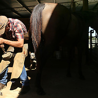 Adam Robison | BUY AT PHOTOS.DJOURNAL.COM<br /> McMillen starts cleaning Mikey's left back hoof and uses farrier hoof nippers to cut away the excess growth on the hoof and prepares it for fitment of a new shoe.