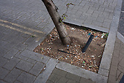 A detail of a leaning tree stump with its watering hose and dropped cigarette butts in a south London street.
